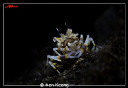 SNOOT SHOT WITH SUBSEE +10 by Ken Keong 